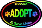 Rescue Adopt and Save Lives Oval Magnet- Rainbow