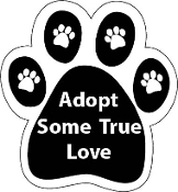 Paw Adopt Some True Love