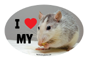 I Love My Rat Oval Magnet (photo) - NEW!