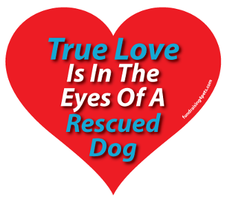 True Love is in the Eyes of a Rescued Dog Heart Magnet