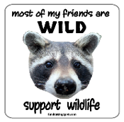 Most of My Friends Are Wild -Raccoon- Magnet - NEW!