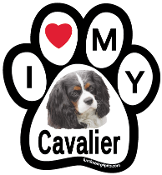 I Love My Cavalier Paw Print Magnet - NEW!