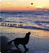 It's a Ruff Life magnet - NEW!