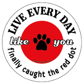 Live Every Day Like You Finally Caught the Red Dot - NEW!