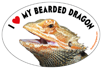 I Love My Bearded Dragon oval magnet *NEW*