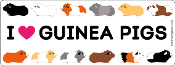 I Love Guinea Pigs rectangle magnet *NEW*