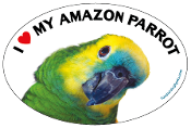 I Love My Amazon Parrot oval magnet (blue accent) - NEW!
