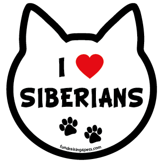 I Love Siberians cat head magnet *bargain bin*
